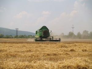 Ivanindvor žetva pšenica