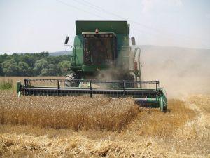 Ivanindvor žetva pšenice