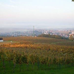 vinogradarstvo14