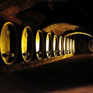 vinogradarstvo22